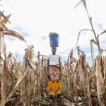 What is the Food Security Impact of COVID-19 in African Countries?