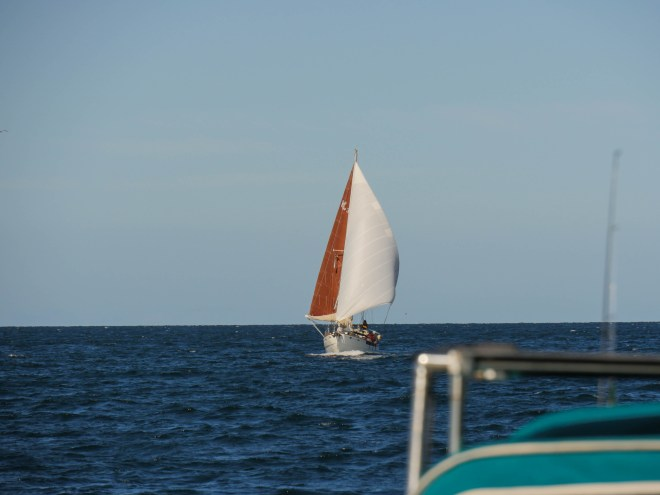 Underway to Altata, Prism flying dead downwind 'wing-on-wing,' with the main and the jib on opposite sides of the boat. It's a beautiful sail position but requires a watchful eye, as a slight change in direction can backfill the main and cause it to jibe (swing to the other side of the boat) violently.