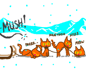 Iditarod cats