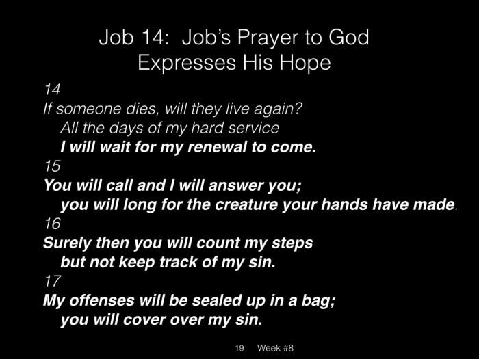 Book of Job, Raz, Week #8.019