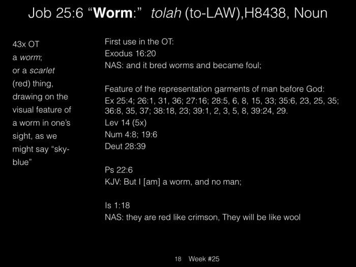 Book of Job, Week #25 LB.018