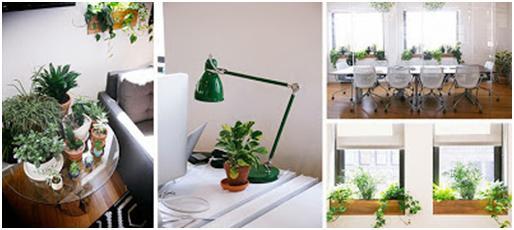 Que ventajas tiene poner plantas en la oficina for Que tiene una oficina