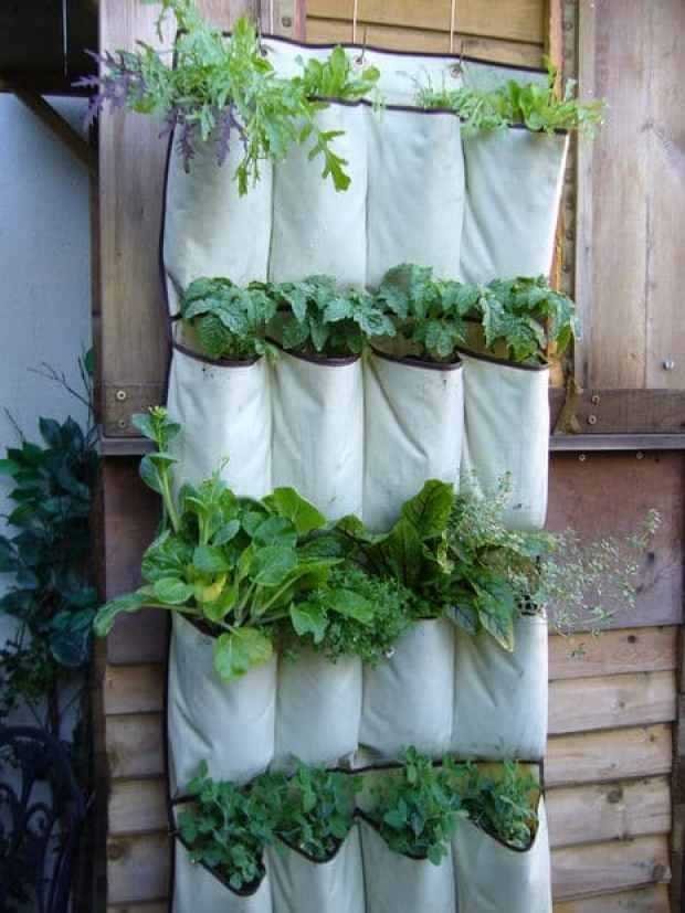 Use-A-Hanging-Shoe-Rack-To-Plant-Herbs-In