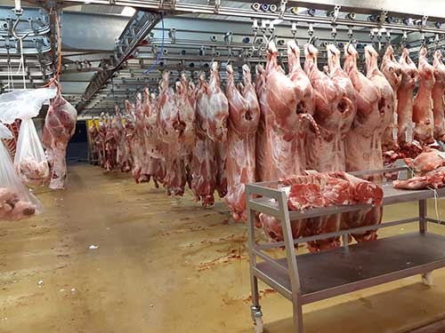 Carcasses de viande bovine