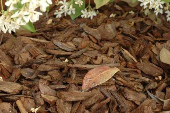 La pacciamatura è un validissimo alleato nella protezione delle piante