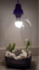mini giardino in bottiglia