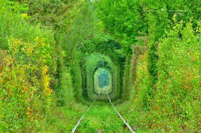 tuneluliubirii9