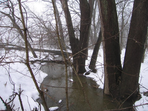 winter stream with trees and snow