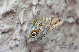 Insel Mainau - Schmetterling-150904-01