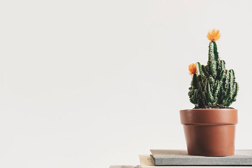 8 choses apprises depuis que je suis devenue autonome dans mon business