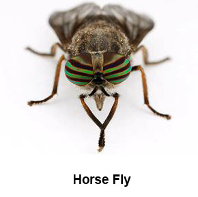 Image result for a fly bite