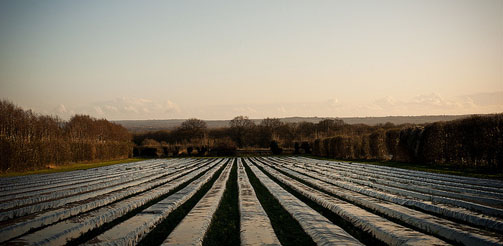 West Peckham Polytunnels. Credit: Chris Guy - Flickr (CC BY-NC-ND 2.0)