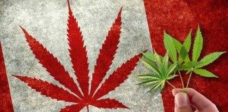 marijuana-stocks-canadian