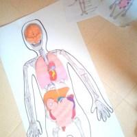 Notre découverte du corps humain