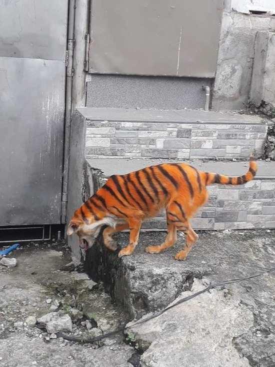 σκύλος βαμμένος πορτοκαλί με ρίγες