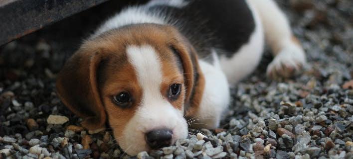 Θανάτωσαν 23 σκυλιά στο δήμο Ρήγα Φεραίου