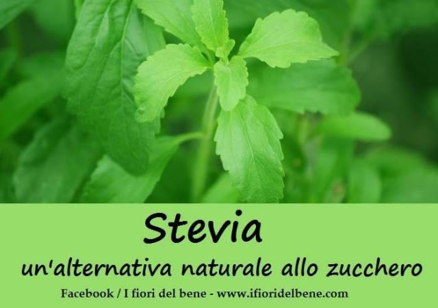 Stevia , l'alternativa allo zucchero