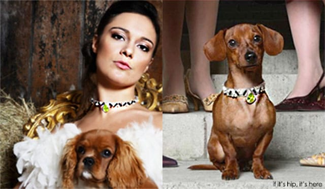 jari unlimited matching jewelry for pets and owners