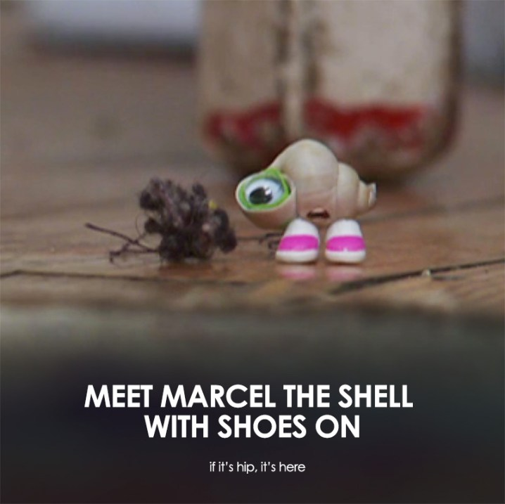 meet marcel the shell with shoes on