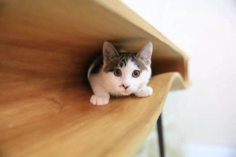 CAT TABLE 2 IIHIH