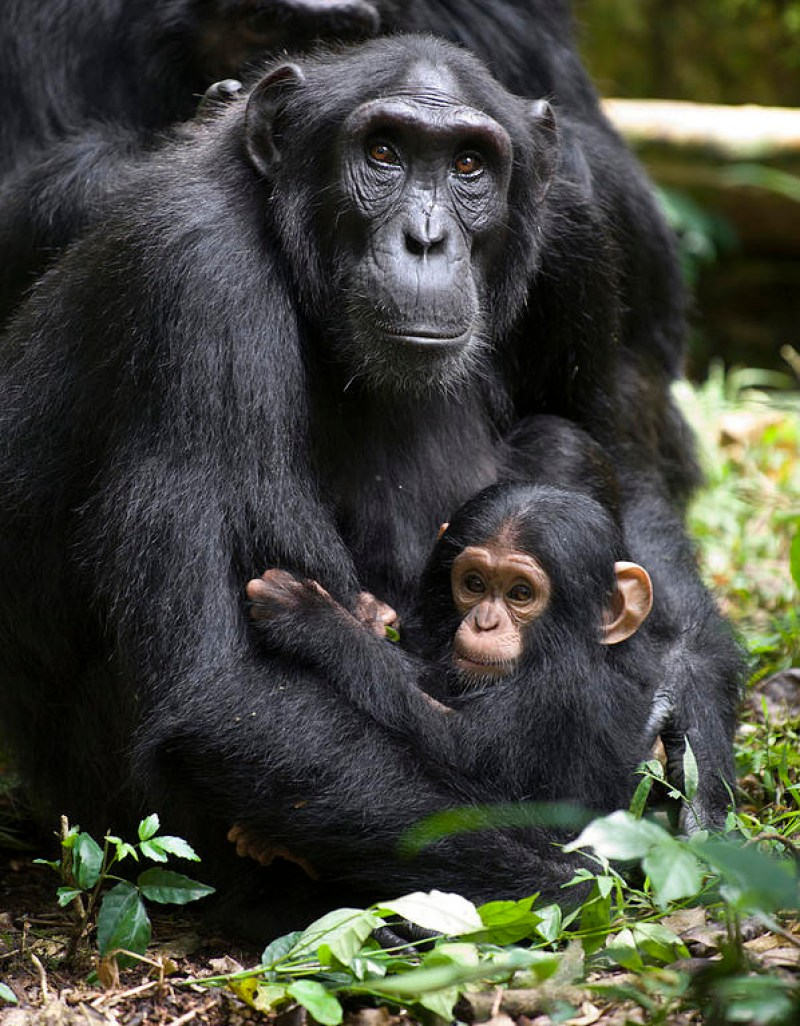 25 Incredibly Touching Wildlife Photos Of Animal Moms And