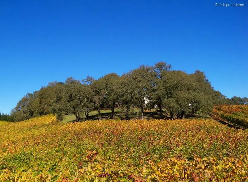 retrospect vineyard residence 17 IIHIH