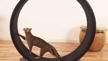 Reddit Cat Playing Jenga - The Best Cat 2018