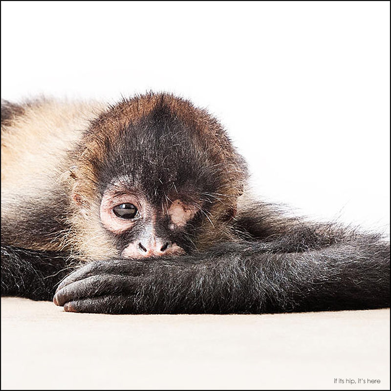 Anna Psalmond photos of rescued animals