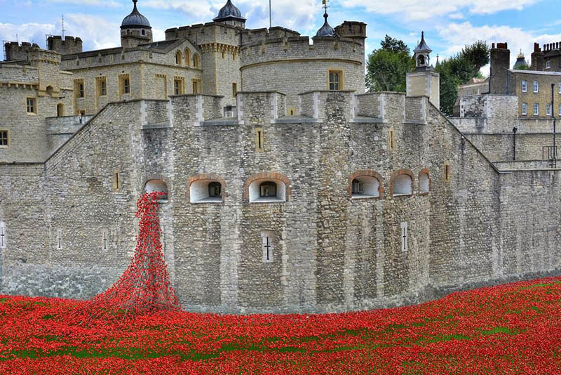 tower+of+london+poppies+