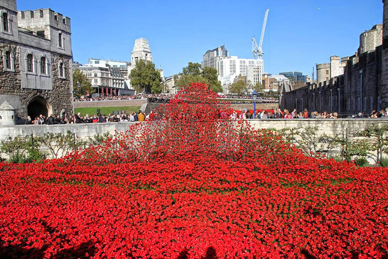 vceramic poppies at tower of london