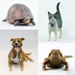 From Turtles To Terriers,  3D Printed Likenesses Of Your Pet.