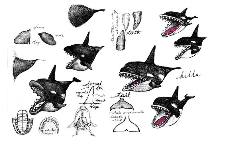 fiona shark sketches
