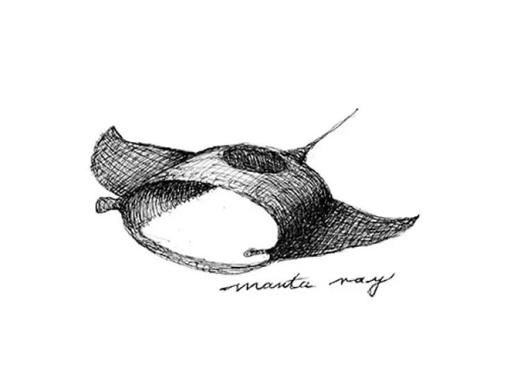 manta ray sketch