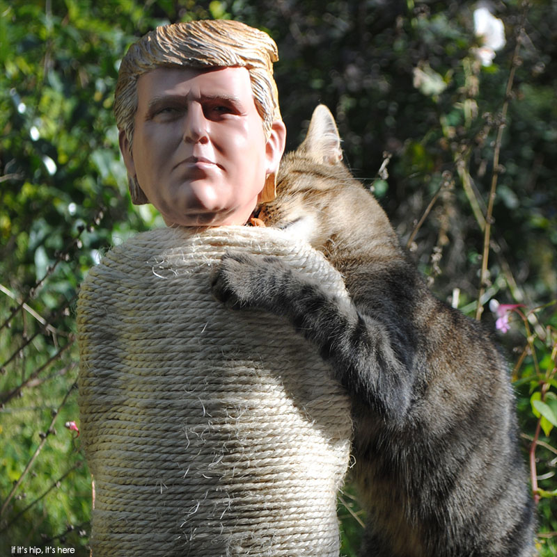Trump scratching post at if it's hip, it's here