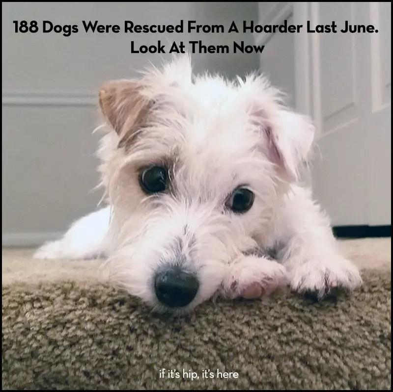 The 188 Rescue Group Calendar