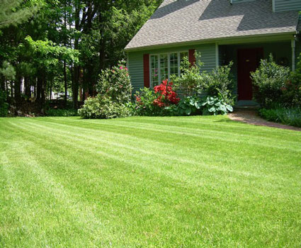 lawn maintenance blythewood