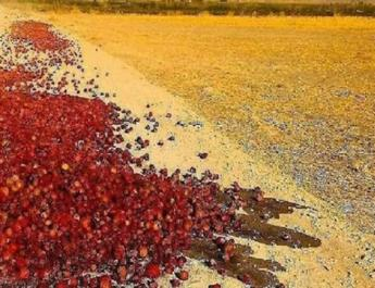 ifmat - Iran government loots farmers