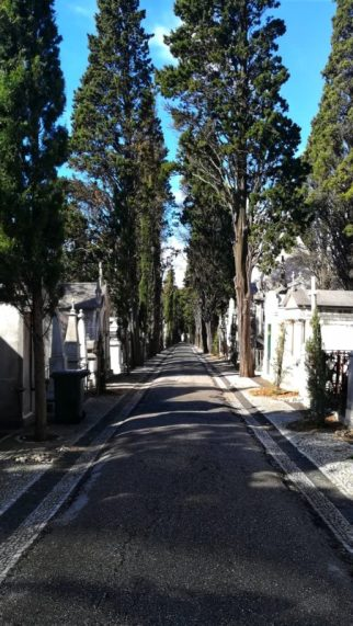 Cimitero Dos Prazeres di Lisbona e viali con Alberi