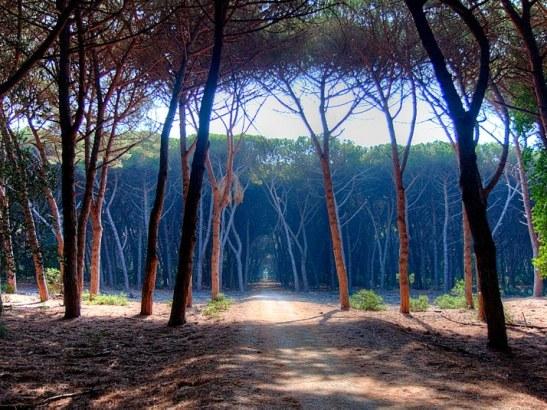 Toscana-riserva-duna-feniglia