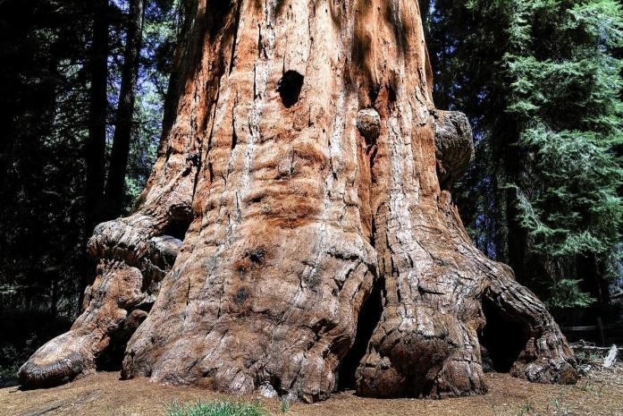 tuolumne grove alberi sequoia