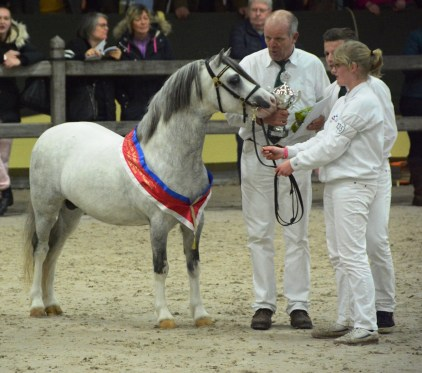 Champion A und Tagesreservechampion Oldenzijlster Atllantis Ermelo2016_Foto: Rosenthal