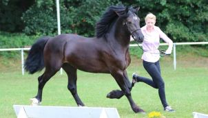 Cascob Welsh Black (4)