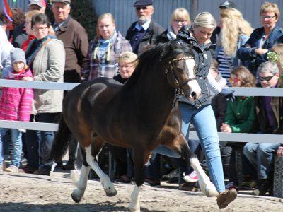 Leybuchts Landon (3)