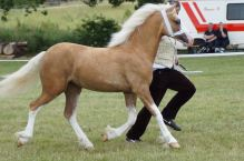 FMS Golden C Lady Moonlight-HB