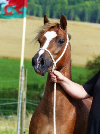 Tyngwndwn Lady Cariad Foto Annika Berg
