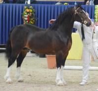 42 Shamrocklake Oliver Twist Champion Sektion D DSC_7749
