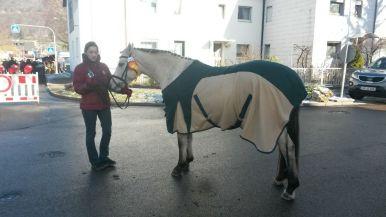 Geislinger Pferdemarkt