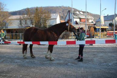 Pferdemakrt Geislingen (2)