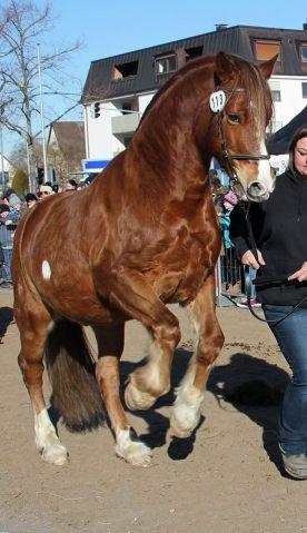 Pferdemakrt Geislingen (3)