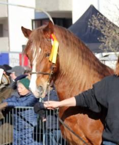 Pferdemakrt Geislingen (4)